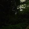 「ホタル」の撮影 2021年6月8日 その2 (機材: LAOWA 9mm F2.8 ZERO-D、OLYMPUS PEN Lite E-PL3、三脚 SLIK PRO804CF 、自由雲台 Velbon PH-263  )