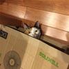猫の習性は面白い