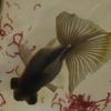 ロッテの水族館