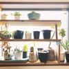 多肉植物の冬支度。バルコニー温室化と南窓への棚増設。