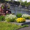 霊園風景 その69 「‥花のお墓の 衣替え」