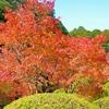 「九年庵」九州の紅葉人気ランキング1位、11月の紅葉の時期に9日間だけ一般公開される佐賀県神埼市。