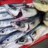 豪雨の鹿児島から!漁港直送の魚たち!