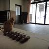 日景温泉の宿猫:『茶々丸』と『くぅ』。