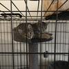 ベルギーで保護猫を引き取る話