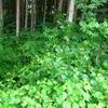 森のバトン