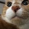 うちの飼い猫を紹介します!15歳になりました!