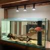 水槽マンションにオススメ!ダクトレールで水槽の照明をお洒落にしよう!!