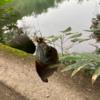 【息抜き】ブルーギル釣りの魅力