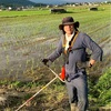 田んぼの草刈りヘルプ。