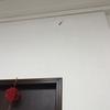 台湾生活 ゴキブリが怖い