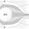 バセドウ病で眼球突出する理由