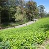 世界一周163.164日目 スリランカ(50) 〜セイロンティーのふるさとで茶畑を訪ねる〜