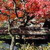 松岡山東慶寺の紅葉