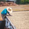 コーヒー果実からコーヒー種子を取り出してコーヒー豆という農産物商品を作ることを精製と呼んでいます