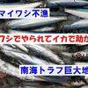 【前兆】徳島県のマイワシ不漁は南海トラフ巨大地震の前兆?~「イワシでやられてイカで助かる」
