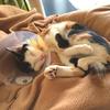 猫の避妊手術記録