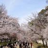 どこへ行っても桜だらけな醍醐寺 その2
