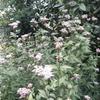 10月17日花と花言葉・歌句