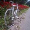 自転車によるあおり運転も罰則適用