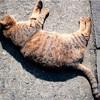 台湾4日目「猫の村ほうとんへ!」