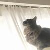 【2020大掃除開始】猫も喜ぶカーテンお洗濯