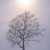 桜色の空 冷たい太陽