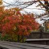 深川不動尊の紅葉