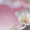 ぬくもりが静かに香る梅の花