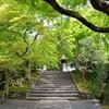 安楽寺の新緑を撮影!