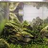30㎝キューブ水槽に苔取り生体を新たに導入したら苔とのバランスが取れた
