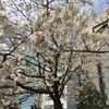 昼食2:吉富寿し(長浜、福岡)
