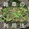【家庭菜園】邪魔な雑草は上手に利用して適度に付き合うのがコツ