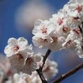 2月下旬:駒沢オリンピック公園をお写んぽ。 その1 梅の木編