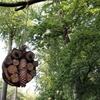 デンマーク、森のようちえんを訪問!