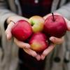 appleの新商品がお求めやすい値段な件