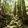 大台ヶ原「緑の尾根」ルートで人知れず美しい森に出会う