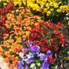 春のガーデニング②雑草取りの優れたアイテムでサクサク草むしり!