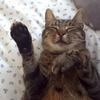 涙が止まらない。私の目の前で猫が・・・。