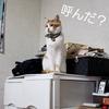【猫画像】冬のこの季節がやってきました!【ペット】
