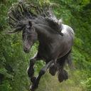 黒馬の気まぐれ競馬