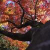 紅葉の香嵐渓で人混みを避けて飯盛山へ登る