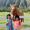ハワイで迎えた大晦日〜お正月と新年のご挨拶。