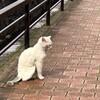 今日の景色 05/26 猫・アジサイ