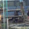 上野動物園20回目