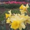花盛り・・・。