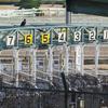 厳選穴馬★4/25(土)G3福島牝馬S(6番カリビアンゴールド)など計8レースの穴馬予想