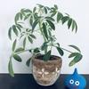 簡単💚ズボラな管理でも枯れにくい丈夫な観葉植物たち🌱