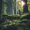 森林浴の健康効果