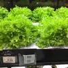 地球(日本)🌎の裏:ブラジルにて、「スーパーの野菜売り場」で...なんじゃこりゃ〜!?😮